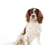 Pet Photography by Anna Pasquale, Cambridge UK